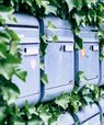 Post boxes with greenery